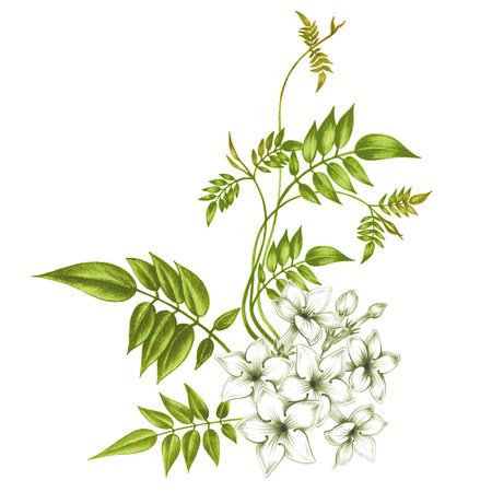 flores de jazmín aislados sobre fondo blanco. Diseño de telas, textiles, papel, papel pintado, tela. Vendimia. Ilustración de vector