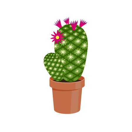 flowering cactus: Flowering Cactus in a pot - home flower. Vector illustration. Illustration