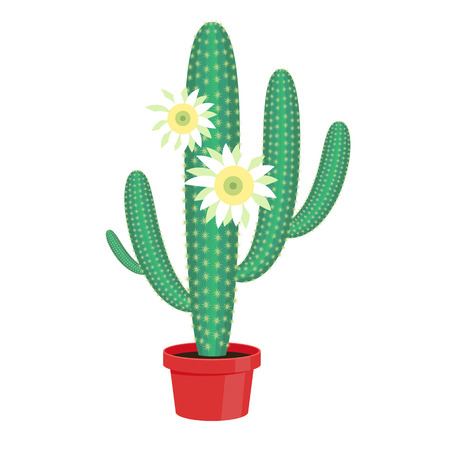 floriculture: Flowering Cactus in a pot - home flower. Vector illustration. Illustration
