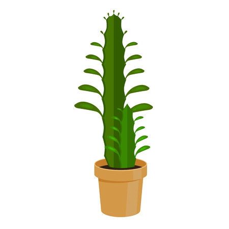 floriculture: Cactus in a pot - home flower. Vector illustration. Illustration