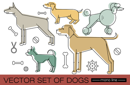 breeds: Set of different dog breeds. Vector illustration of animals isolated on white background. Illustration