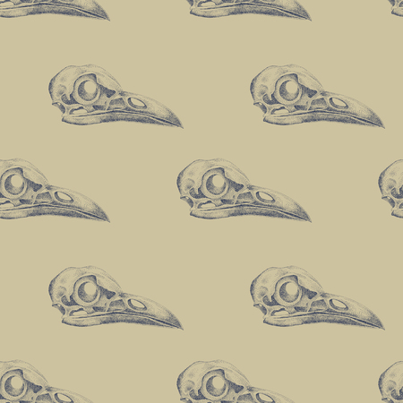 cranial: Vintage vector pattern with skulls raven.