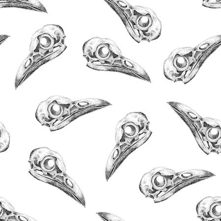 raven: Vintage vector pattern with skulls raven on a white background.