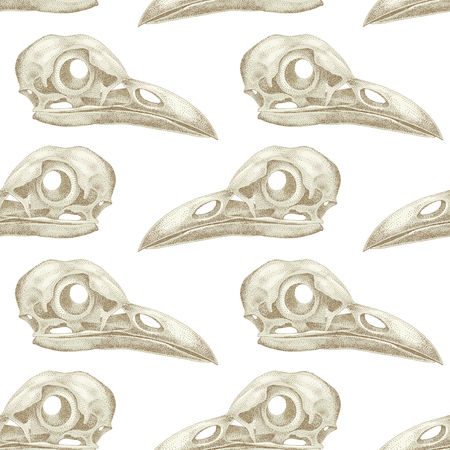 cranial: Vintage vector pattern with skulls raven on a white background.