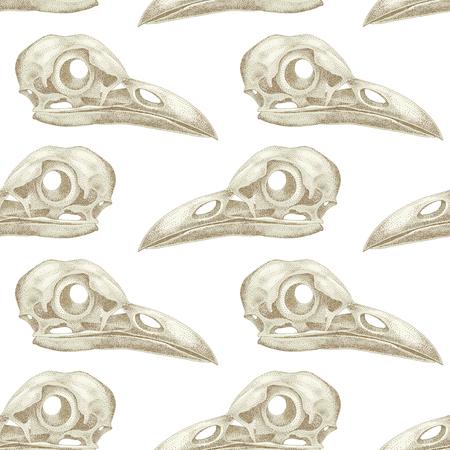 cranial skeleton: Vintage vector pattern with skulls raven on a white background.