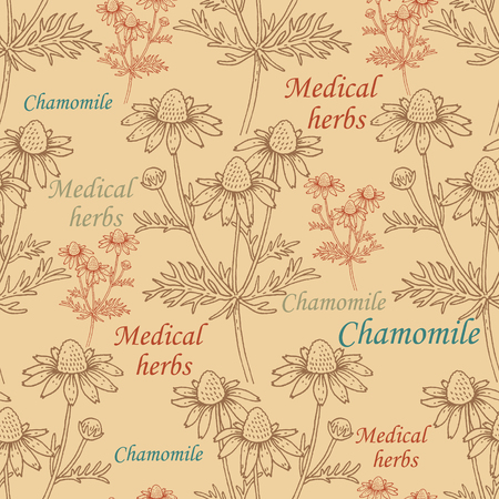chamomel: Seamless pattern with chamomile flowers and inscriptions. Vector. Vintage. Design for wrapping paper, Wallpaper, textiles, fabrics.