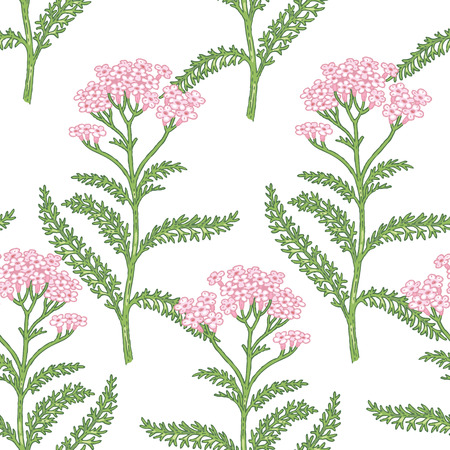 milfoil: Illustration of milfoil. Seamless vector pattern. Flowers of medicinal plants on a white background.
