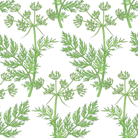 Illustration of lemons. Seamless vector pattern. Flowers of medicinal plants caraway on a white background.