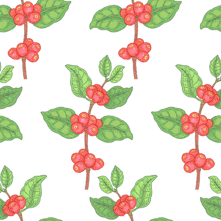 coffee berry: Illustration of coffee berry. Seamless vector pattern. Branches with berries medicinal plants on a white background. Illustration
