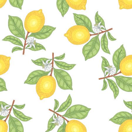 Illustration of lemons. Seamless vector pattern. Fruits on a white background.