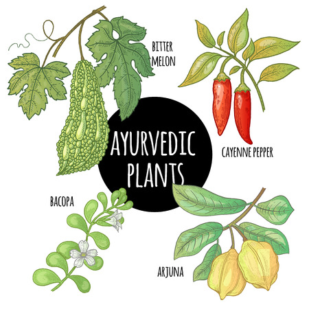 bitter: Illustration set of vector Ayurvedic herbs and plants. Arjuna, Bacopa, cayenne pepper, bitter melon isolated on white background. Natural supplements, concept beauty, health and nature.