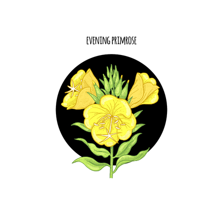 Vector illustration of evening primrose flower in a black circle on a white background. Design of packaging, cosmetics, shampoos, health supplements.