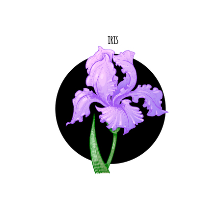 arranging: Vector illustration iris flower in a black circle on a white background. Designed for packaging decoration, flower arranging, cosmetics, shampoos, health supplements. Illustration
