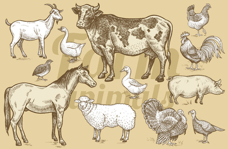 Goat, cow, horse, sheep, pig, goose, quail, duck, couple turkeys, rooster, hen. Illustration of isolated farm animals in the style of vintage engraving. Vector set.