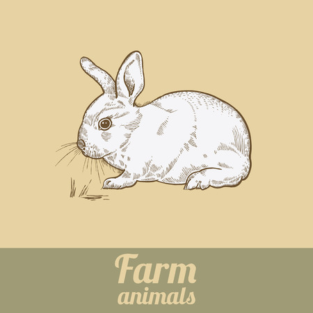 coney: Farm animal rabbit. Bunny colored print. Style vintage engraving. Vector illustration of series - farm animals isolated. Template for packaging design farm products; signage natural food stores. Illustration