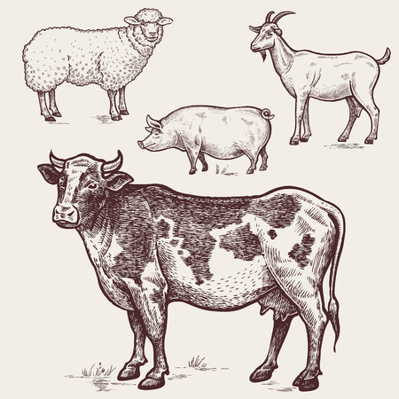 Vector illustration?set poultry - cow, sheep, pig, goat. A series of farm animals. Graphics drawing. Vintage engraving style. Nature. Sketch. Isolated farm animals on white background.