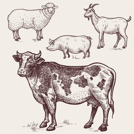 Vector illustratie set gevogelte - koeien, schapen, varkens, geiten. Een reeks van landbouwhuisdieren. Graphics tekenen. Vintage graveren stijl. Natuur. Schetsen. Afgelegen boerderij dieren op een witte achtergrond.