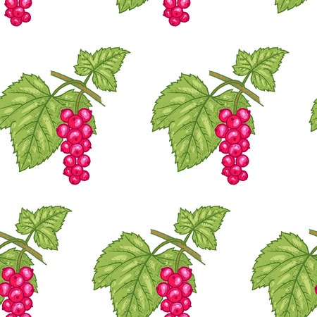 red currant: Vector seamless pattern. Branches with leaves and Red currant on a white background. Illustration for design packaging, paper, wallpaper, fabrics, textiles.