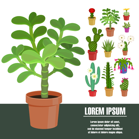 Blooming cactus. Vector illustration. Template page with the image of different kinds of cactus flower. Isolated on white background. Flat design. Illustration
