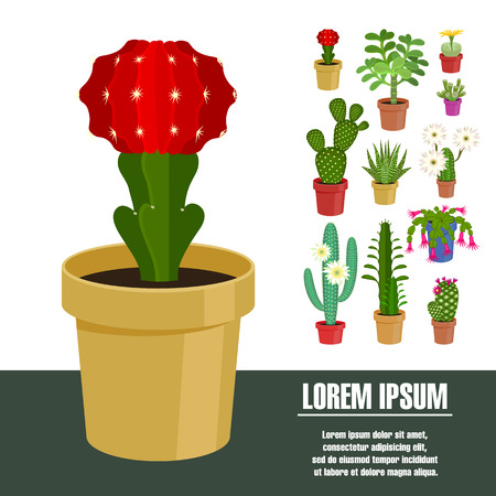 floriculture: Blooming cactus. Vector illustration. Template page with the image of different kinds of cactus flower. Isolated on white background. Flat design. Illustration