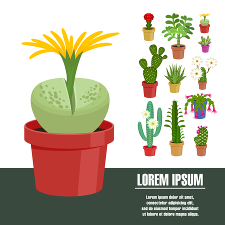peyote: Blooming cactus. Vector illustration. Template page with the image of different kinds of cactus flower. Isolated on white background. Flat design. Illustration