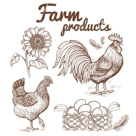 Vektor-Illustration der Farm Vögel - Hahn und Henne-Korb mit Eiern und Blumensonnenblume. Bilder von Tieren und Objekten landwirtschaftlichen Thema, isoliert auf weißem Hintergrund. Handzeichnung, Jahrgang. Standard-Bild - 60864729