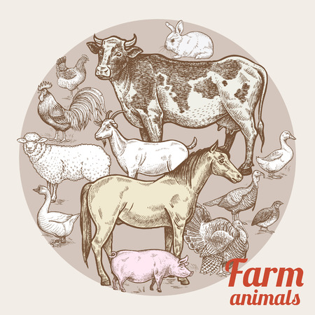 dobbin: Vector illustration - color composition with various livestock, poultry and inscriptions. Designed for shops of farm products, advertising banners, print on bags, packaging, wrapping paper. Vintage