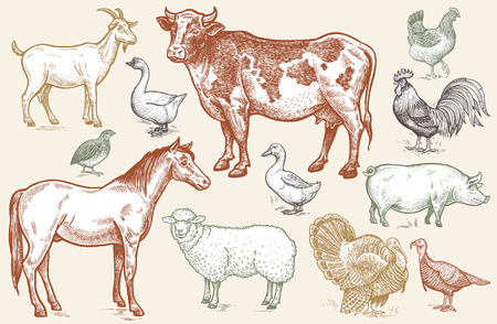 Farm animals. Goat, cow, horse, sheep, pig, goose, quail, duck, couple turkeys, rooster, hen on white background. Color illustration of isolated animals in the style of vintage engraving. Vector set.
