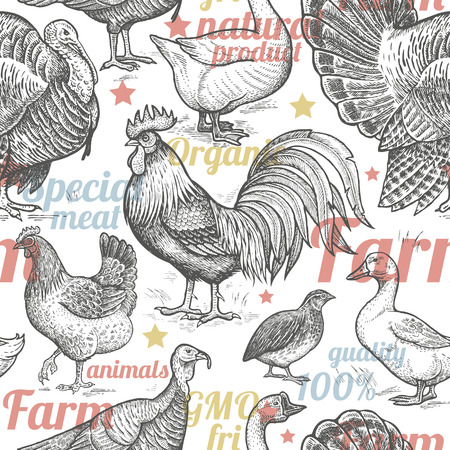 Seamless pattern with poultry, inscriptions. Vector illustration. Farm birds in style of vintage engraving. For packaging farm products, farm food shops. Goose, rooster, chicken, turkey, duck, quail.