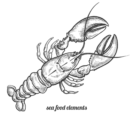 Lobster. Seafood. Vector illustration. Isolated image on white background. Vintage style. Hand drawn seafood image. 矢量图像
