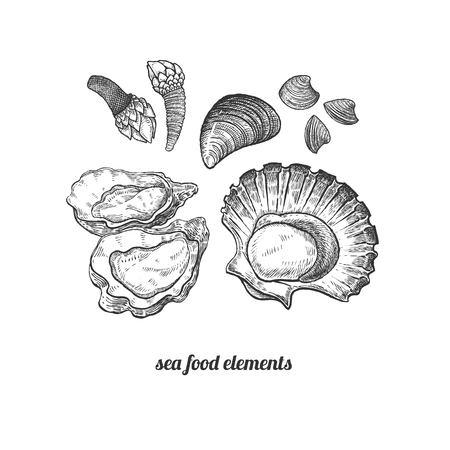 Shellfish, mussels, scallops, oysters, barnacles. Seafood. Vector illustration. Isolated image on white background. Vintage style. Hand drawn seafood image.