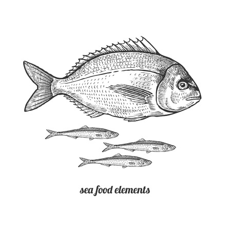 dorado: Dorado fish and anchovies. Seafood. Vector illustration. Isolated image on white background. Vintage style. Hand drawn seafood image.