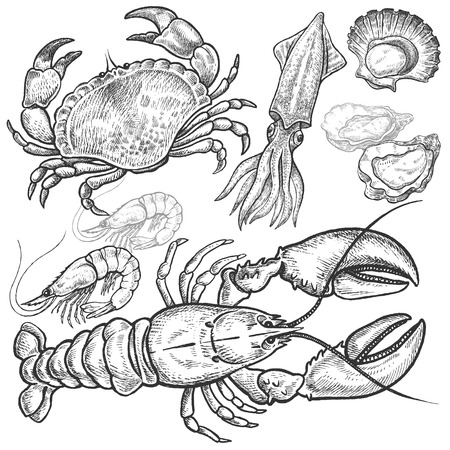 scallops: Seafood. Crab, lobster, squid, prawns, oysters, scallops. Hand drawn seafood set. Vector illustration. Isolated image on white background. Vintage style.