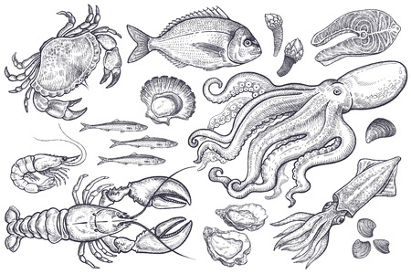 scallops: Crab, lobster, shrimp, fish, dorado, anchovies, oysters, scallops, octopus, squid, mussels, piece of salmon. Illustration of isolated sea animals, vintage engraving on white background. Vector set.
