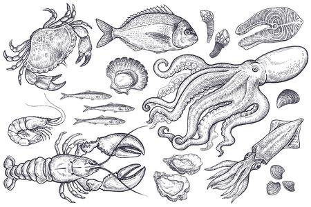 Krab, homar, krewetki, ryby, dorado, anchois, ostrygi, przegrzebki, ośmiornica, kalmary, małże, kawałek łososia. Ilustracja pojedyncze zwierz? T morskich, rocznika grawerowanie na bia? Ym tle. Wektor zestaw.