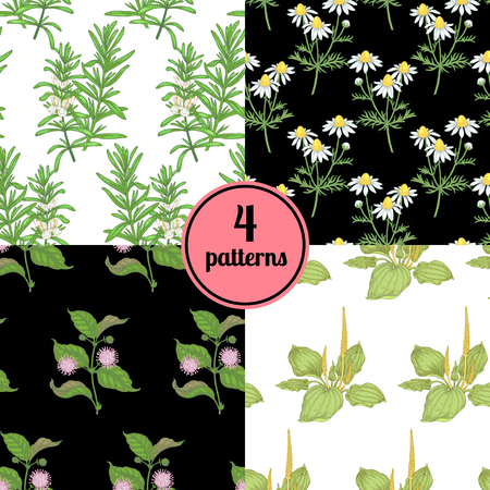 plantain: Set of four seamless vector patterns with various plants daisy, plantain, rosemary.