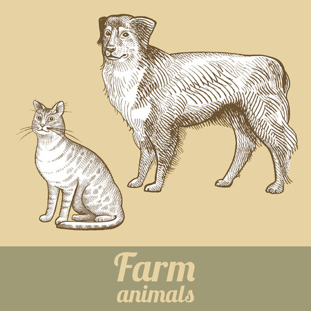 herding dog: Herding dog and cat. Series vector illustration of farm animals. Style vintage engraving. Illustration