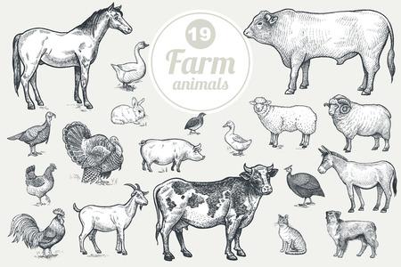 cavie: Animali da fattoria. Capra, mucca, cavallo, pecora, maiale, toro, pecore, asino, cane, gatto, uccello oca, quaglie, anatra, coppia tacchini, gallo, gallina, faraona. Isolato su sfondo bianco. insieme vettoriale Vintage. Vettoriali