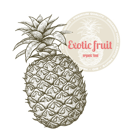 greengrocery: Vector image of exotic fruit pineapple isolated on white background. Illustration vintage style engraving. White and black. Illustration