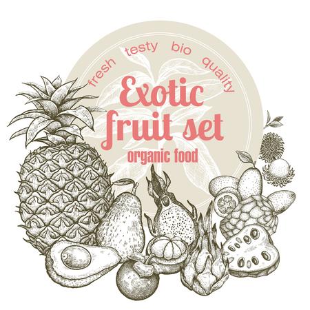 rambutan: Exotic fruit pineapple, dragonfruit, rambutan, kumquat, mangosteen, cherimoya, avocado. Illustration vector image isolated on white background. Style vintage engraving. Black and white.