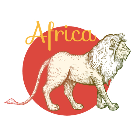 royal safari: African animals. Lion. Illustration Vector Art. Style Vintage engraving. Hand drawing.