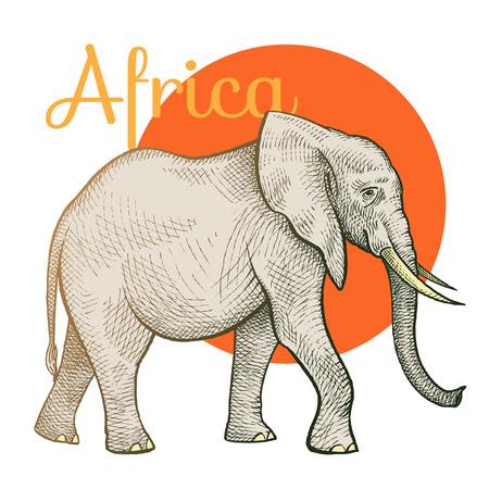 animales africanos. Elefante. Ilustración del arte del vector. Estilo de grabado de época. Dibujo a mano.