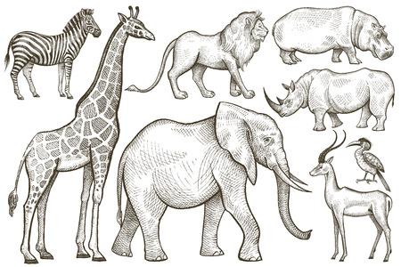 African animals set. Elephant, giraffe, zebra, lion, hippo, rhino, antelope. Illustration Vector Art. Style Vintage engraving. Hand drawing isolated on white background. Ilustração