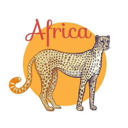 animales africanos. Leopardo cazador. Ilustración del arte del vector. Estilo de grabado de época. Dibujo a mano. Ilustración de vector