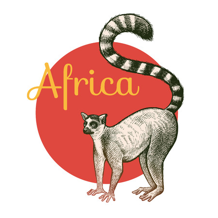 African animals. Lemur. Illustration Vector Art. Style Vintage engraving. Hand drawing.