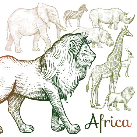 royal safari: Poster African animals. Vector illustration for book covers, brochures, text, signage, visual aid for children. Drawing on white background. Elephant, lion, giraffe, rhino, hippo, zebra, antelope. Illustration