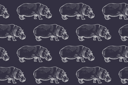 behemoth: Old engraving hippopotamus. Vector illustration seamless pattern. White and black. African animals. Illustration