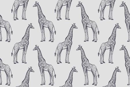 Vieilles gravures de girafes. Modèle sans couture d'illustration vectorielle. Blanc et noir. Animaux d'Afrique Banque d'images - 62970552