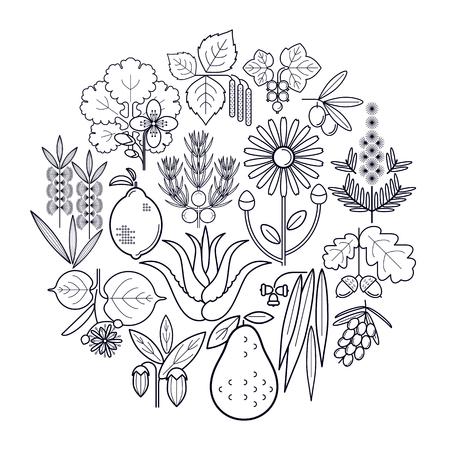 tea tree: Set medical herbs in circle. Currant, olive, juniper, celandine, sage, avocado, arnica, acacia, lime, tea tree, oak, buckthorn, eucalyptus, birch, lemon, aloe, jojoba. Vector. White and black. Illustration