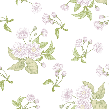plum flower: Plum flower on white background. Seamless vector pattern.